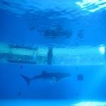 ジンベイザメ | 八景島シーパラダイス | Nikon D600+Ai AF 24-120mm F/3.5-5.6