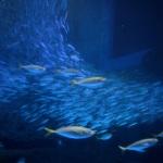 大水槽 | 八景島シーパラダイス | Nikon D600+Ai AF 24-120mm F/3.5-5.6
