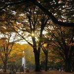 代々木公園 | 2010/11/07<br />Nikon D90+TAMRON SP AF 17-50mm f/2.8 XR DiII LD | 45mm F2.8
