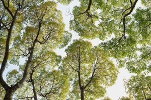番外:わくわくする木々|見上げることの楽しさ3