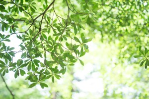 咲きほこる葉|見上げることの楽しさ2